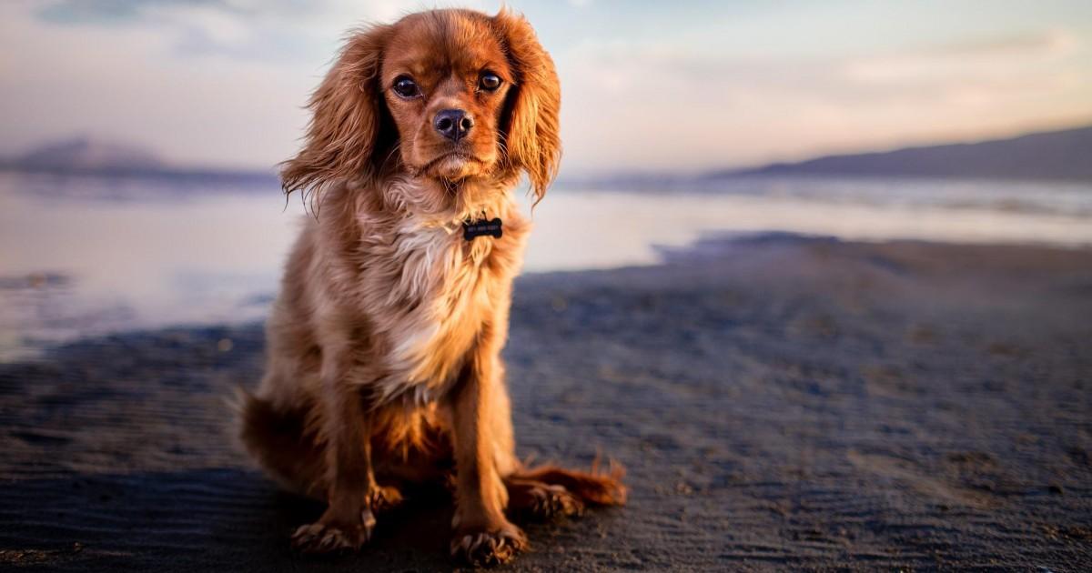 Quels sont les critères importants lors du choix d'une tondeuse pour chien