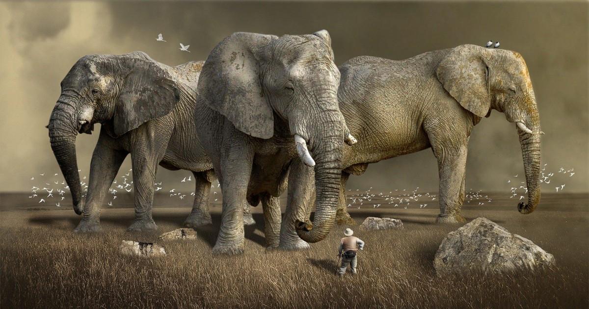 Les jeux vidéo sur la faune sauvage d'Afrique